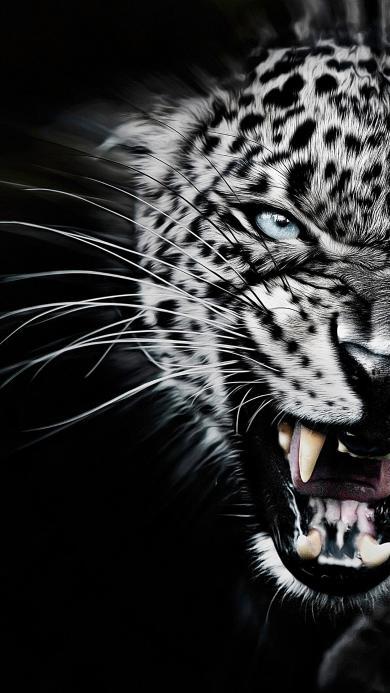 动物 猎豹 危险 肉食性动物 黑白
