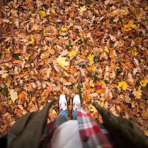 满地落叶 运动鞋 唯美 秋意