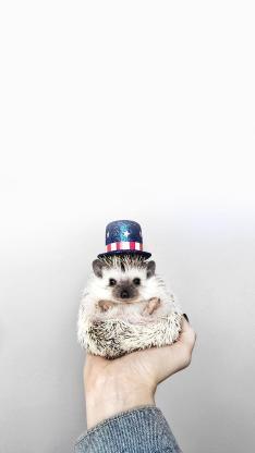 刺猬 魔术帽 可爱 迷你 手