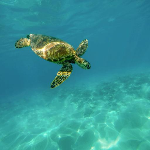 深海 海水 游泳的海龟