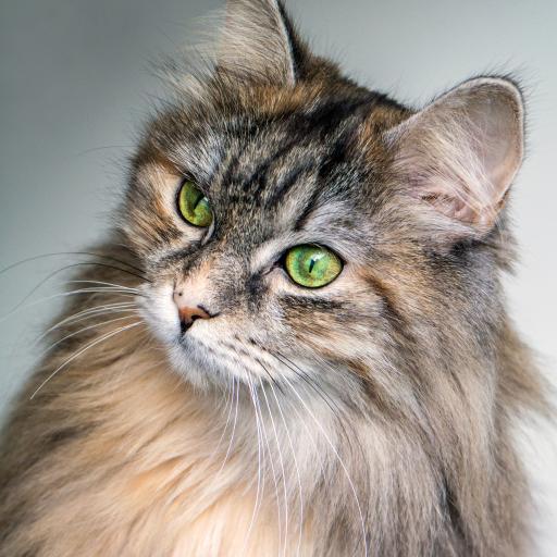 绿色眼眸 唯美 萌宠 猫咪 喵星人
