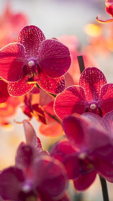 花朵 植物 红花
