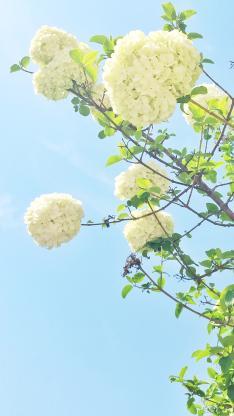 枝头上的白色花簇