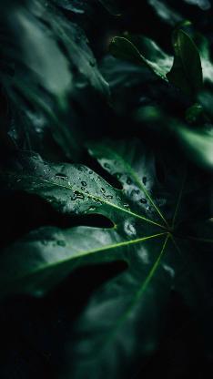 树叶 露水 绿色 枝叶 植被 绿化