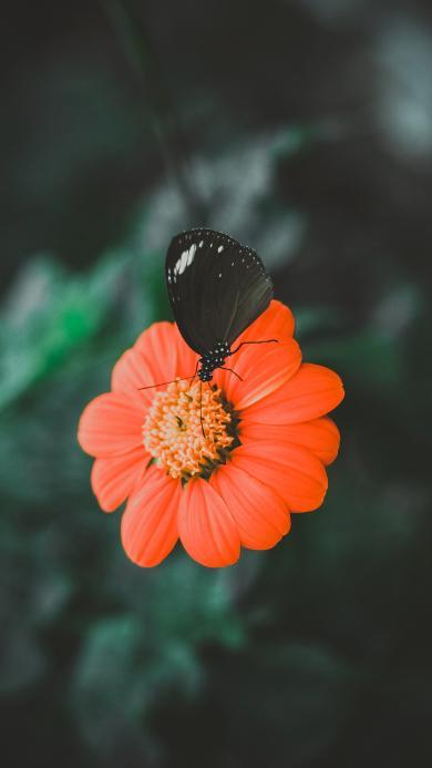 红色鲜花 黑色蝴蝶