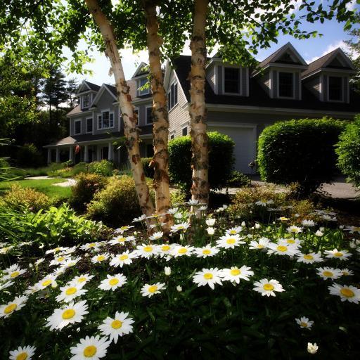 别墅美景 大树 菊花丛 自然生态