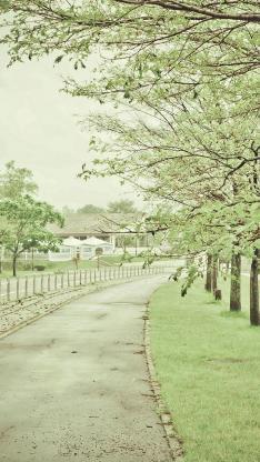 春意 小清新 树木 道路 绿色 文艺
