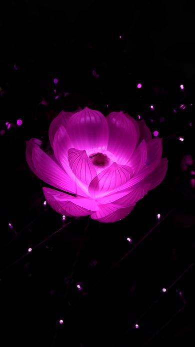 黑色背景 荷花灯 紫色