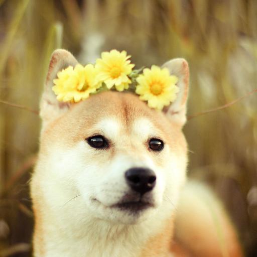 狗狗 小狗 鲜花 花朵