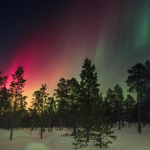 自然极光美景 红色极光 树木