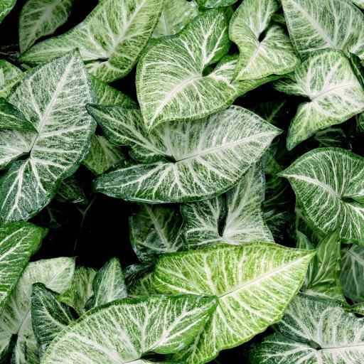 绿叶 自然模式 植物形状 顶视图