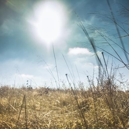 草地 风景 草原 天空