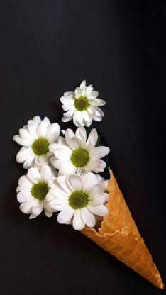 菊花 鲜花 冰淇淋 圆筒 花束 摆拍