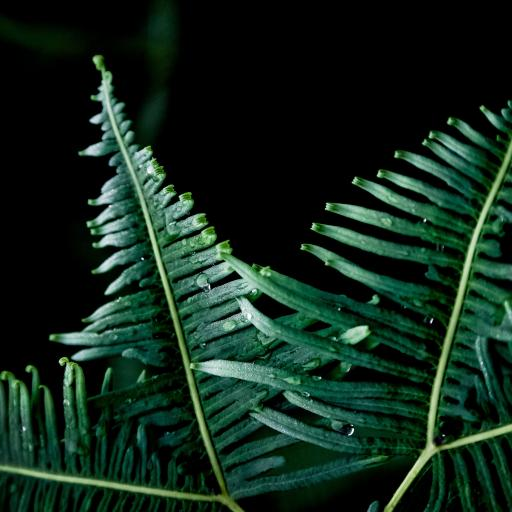 黑色背景 绿色植物 露水