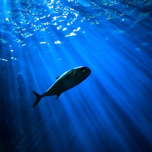 海洋生物 大海 深海