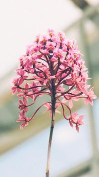 鲜花 花簇盛开 自然 户外 花瓣 植物 季节
