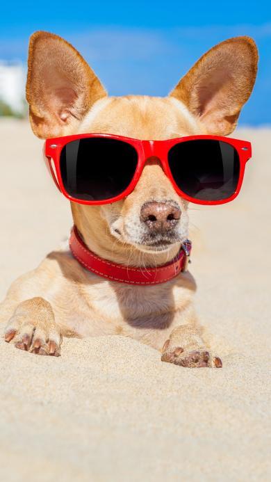 狗狗 墨镜 沙滩 度假 休闲 幽默