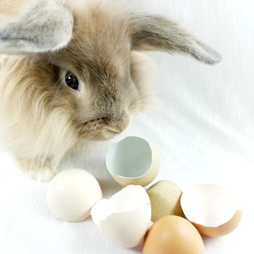 长耳兔 动物 皮毛 鸡蛋壳