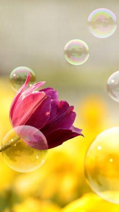 植物 紫红色鲜花 泡泡