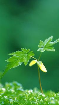 绿色植物 大叶子 草地