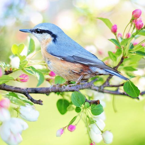 蜂鸟 灰色 机灵 鲜花