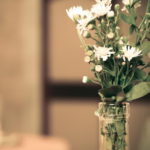 花瓶里的小白菊花束 纯洁