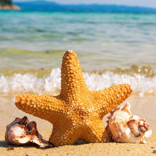 海星 海螺 沙滩 大海 海浪 海岸
