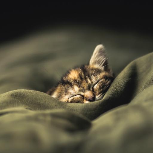 猫咪 动物 可爱 睡觉