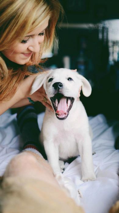欧美美女与宠物狗 小拉布拉多