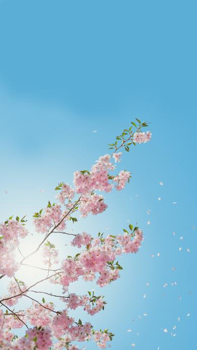 花开 植物花朵 盛开 蔚蓝天空