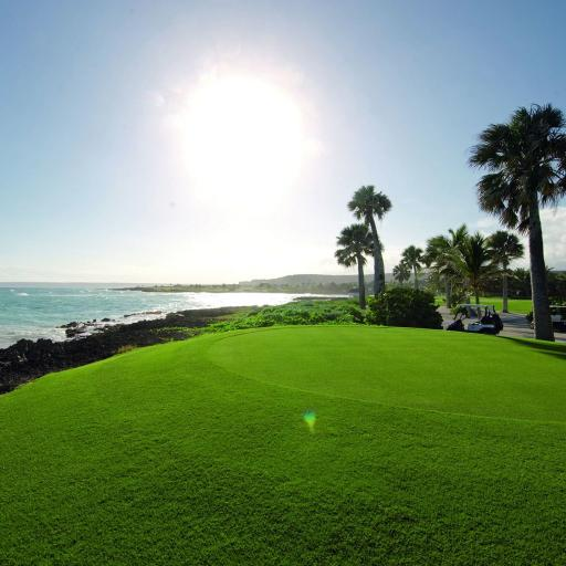 风景 草地 阳光 大海 树木