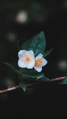 鲜花 植物 盛开 绿叶