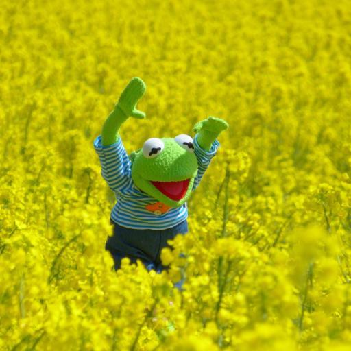 油菜花田 黄色 青蛙玩偶