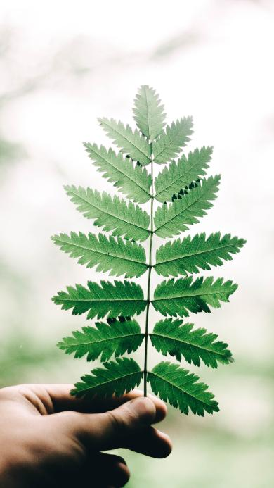 针叶林 树叶 绿叶 阳光