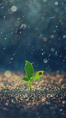 雨天从土地里长出的嫩芽