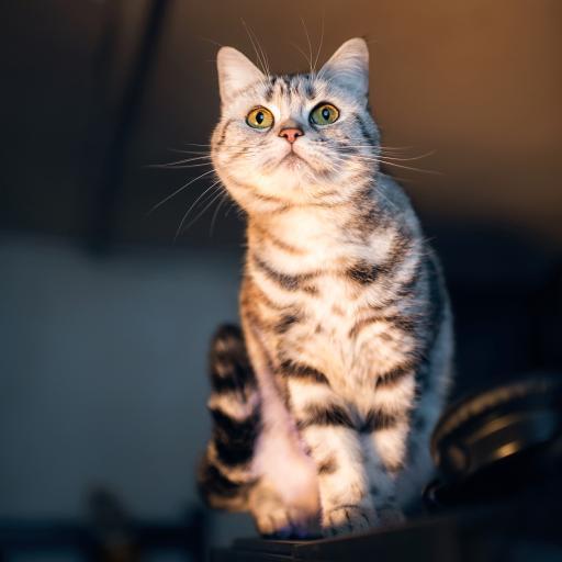 猫咪 小猫 动物 可爱