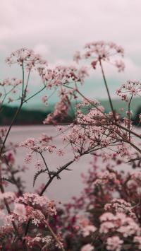 盛开 鲜花 粉色 唯美 春意