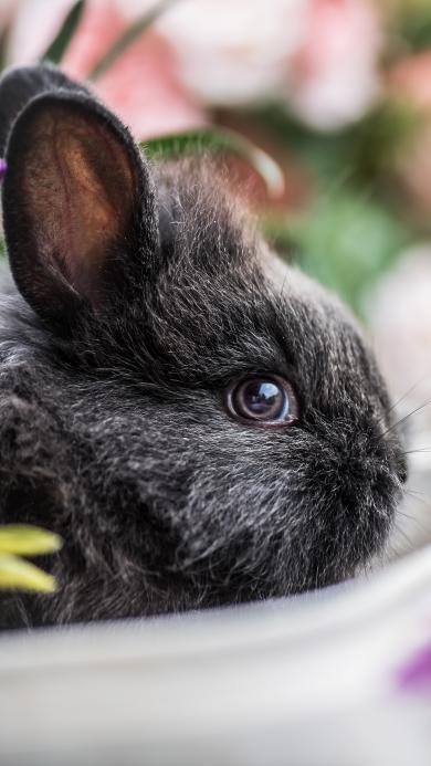 兔子 花草 动物 皮毛
