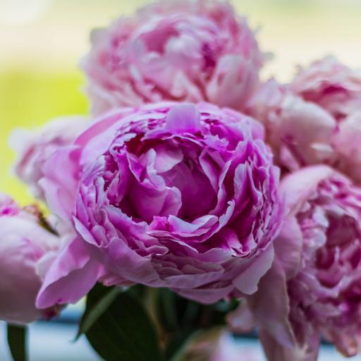 粉色鲜花 梦幻 绽放