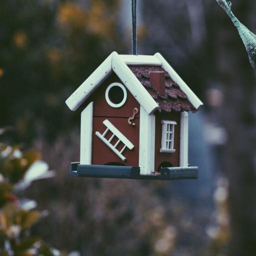 鸟屋 色彩 花园 挂屋 户外 遮蔽