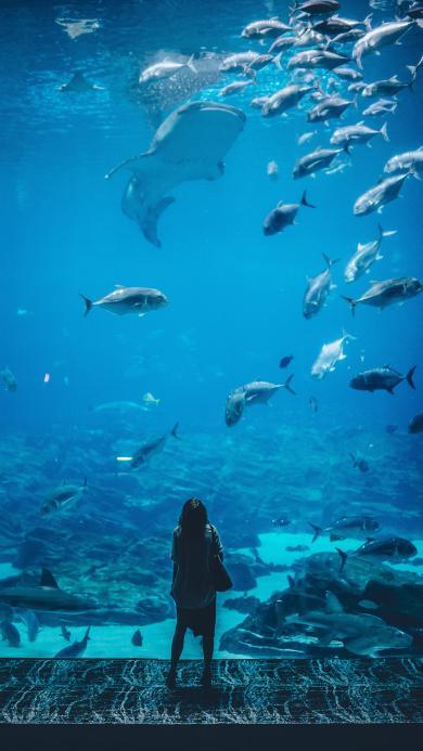 鱼类 鲨鱼 品种 背影