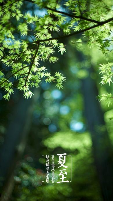 夏至 植物 节气 文字
