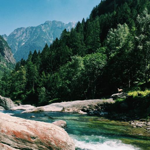 山川 风景 树林 河流