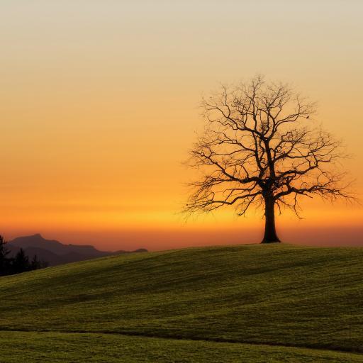 落日 夕阳 枯树 远眺