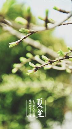 夏至 绿色 二十四节气 阳光 季节