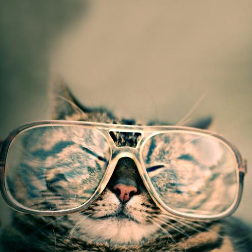宠物猫 戴眼镜的喵星人 创意