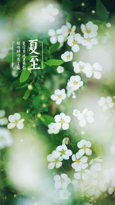 夏至 节气 植物 鲜花
