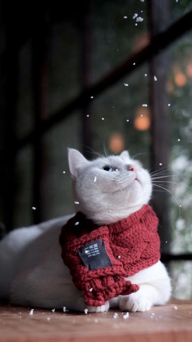 猫咪 动物 围巾 下雪