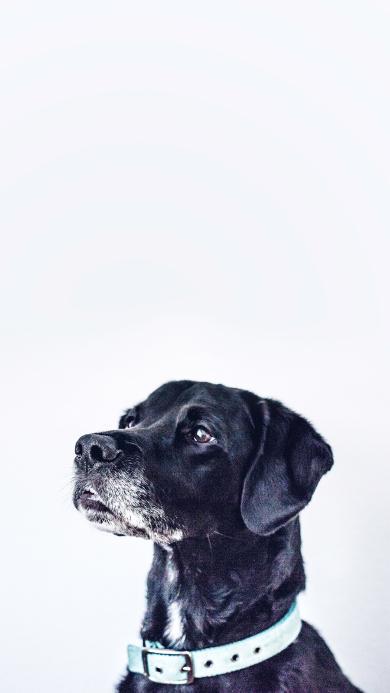 狗 黑 宠物 动物 乖巧