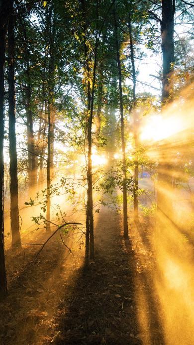 森林 树林 树木 光线 阳光